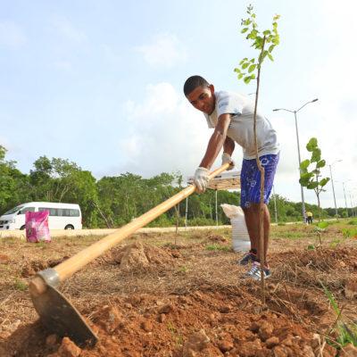 Mantienen campaña permanente de plantación de árboles en espacios públicos de Playa del Carmen