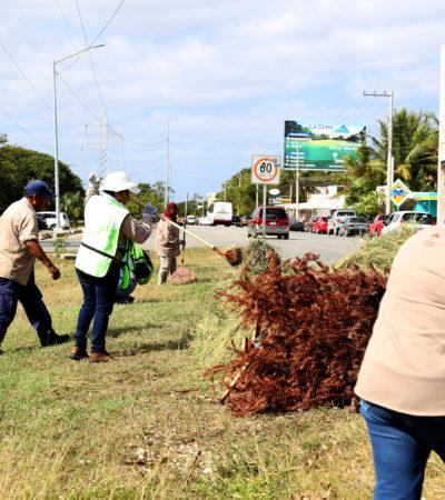 Con la brigada 'Plantando vida', los servicios municipales enfocados al cuidado del medio ambiente recorren Cancún, destacan