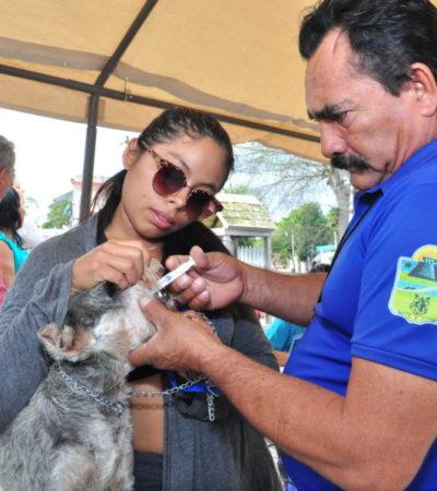 CAMPAÑA DE VACUNACIÓN Y ESTERILIZACIÓN EN TULUM: Pide ayuntamiento concientización a dueños de mascotas