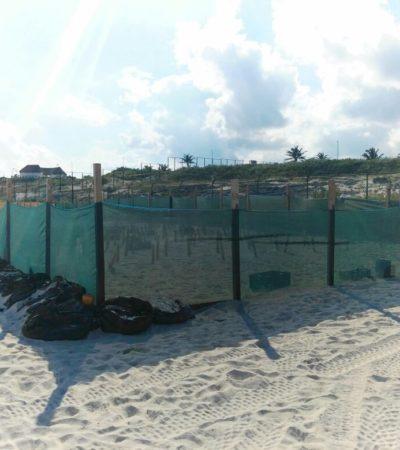 Cuestionan que obra de hotel sobre duna encierra nidos de tortugas en Playa Delfines