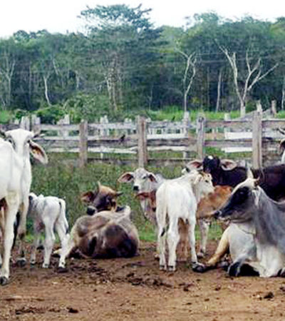 Tenencia de la tierra e inseguridad, problemas para el sector ganadero