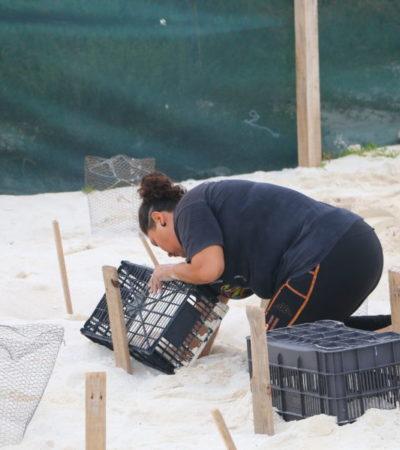 Muertes de tortugas marinas se dan naturalmente, señala Remberto Estrada