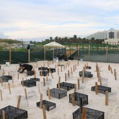 VIDEO | Hallan tortugas muertas en corral junto a Playa Delfines que quedó atrapado dentro del proyecto del hotel Gran Solaris