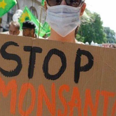 Revocan a Monsanto permisos para siembra de soya transgénica en QR, Yucatán, Campeche, Chiapas y otros 3 estados