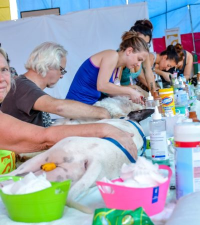 Realizan más de 500 cirugías durante campaña de esterilización canina y felina en Tulum