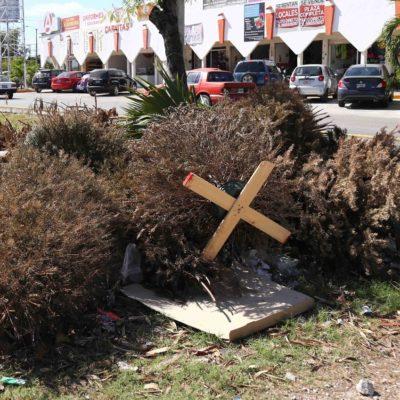 Dispondra Ayuntamiento de Benito Juárez 43 centros de acopio de árboles de Navidad | Consulta ubicaciones