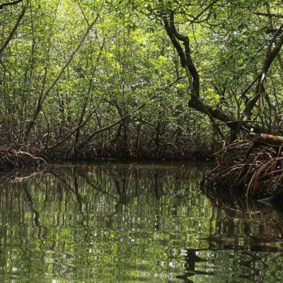 La Red Tulum Sostenible lanza la campaña para la protección de los manglares de la costa del municipio Tulum