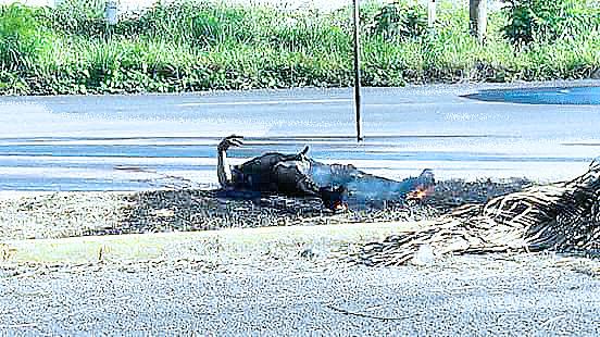 Muere trabajador calcinado en la carretera Playa-Tulum al tocar por accidente un cable de alta tensión