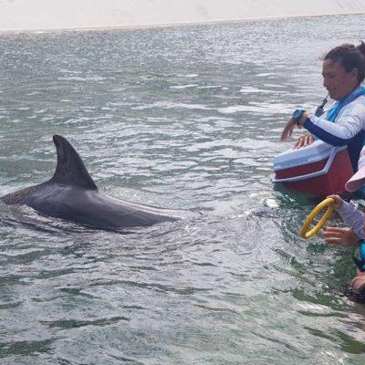 Ofrecen terapia con delfines en Cancún