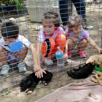 Atienden a más de 15 mil mascotas con programas de bienestar animal en Cancún