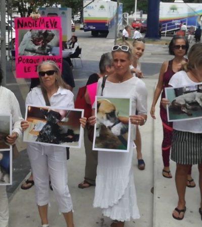 SE HACEN NOTAR EN AUDIENCIA DEL GOBERNADOR: Exigen frenar maltrato animal en Cozumel y denuncian que Ayuntamiento tiene 'oídos sordos'