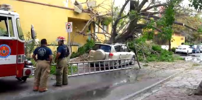 Camioneta repartidora de agua se estampa contra palmera