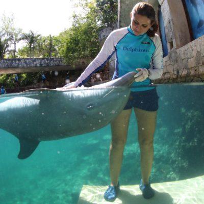 Realizarán estudio internacional sobre bienestar animal en delfinarios de QR