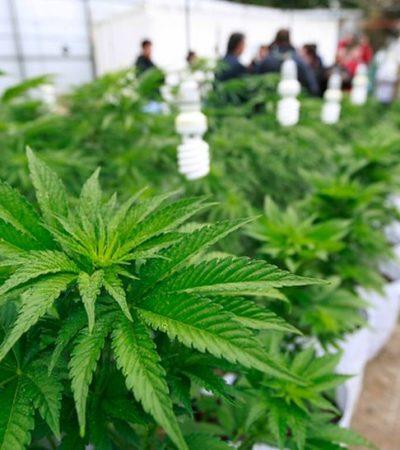 Rechaza Gobernación propuesta de Enrique de la Madrid de legalizar el consumo de marihuana en destinos turísticos como Cancún