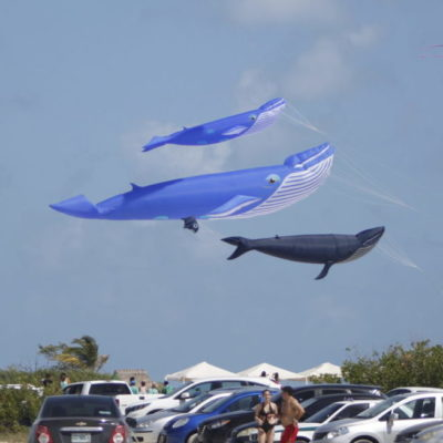 CELEBRAN FESTIVAL DEL PAPALOTE EN ISLA BLANCA: Aficionados y voladores internacionales de papalotes se reúnen durante el fin de semana en el caribe mexicano para convivir y ayudar
