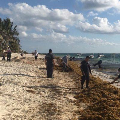 Por no tener o no querer pagar multas, infractores retiran sargazo en Puerto Morelos