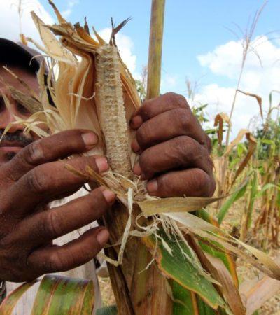 Federación debe apoyar más al campo de Quintana Roo