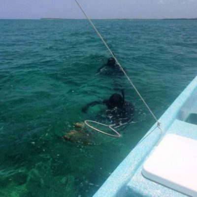 Pesca de langosta en Punta Allen en temporada 2017-2018 es menor al periodo anterior