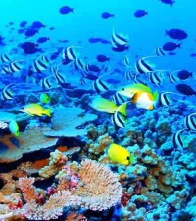 Acusan a PRI y PVEM de bloquear foros de Ley de Biodiversidad