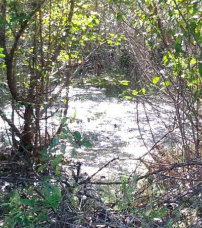 """""""ALLÍ DONDE HAY MONTE ES DONDE LO DEJAN"""": Arroja CAPA aguas negras en manglar en Mahahual, acusa delegado"""