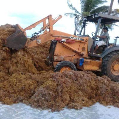 Sargazo, aguas contaminantes y pésima infraestructura, Mahahual no está listo para Semana Santa