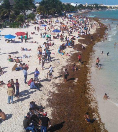 Atiborran las playas pese al sargazo