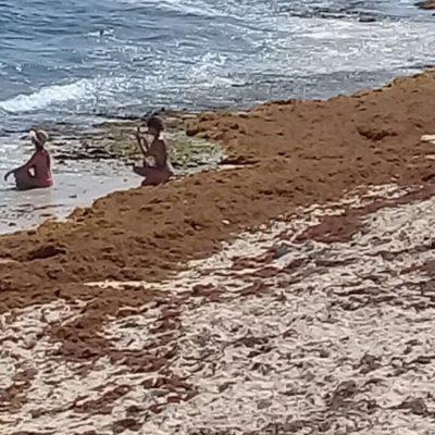 Sargazo alfombra Playa del Carmen y otros rincones de Solidaridad
