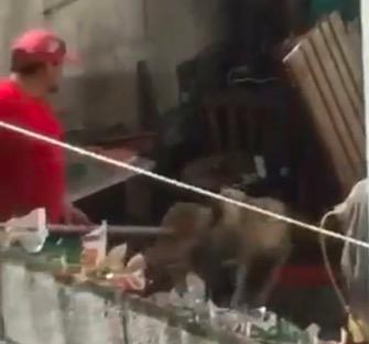 """""""LO VOY A ASESINAR, LO VOY A MATAR"""": Ventilan en redes nuevo caso de maltrato animal en la Región 98 de Cancún   VIDEOS"""