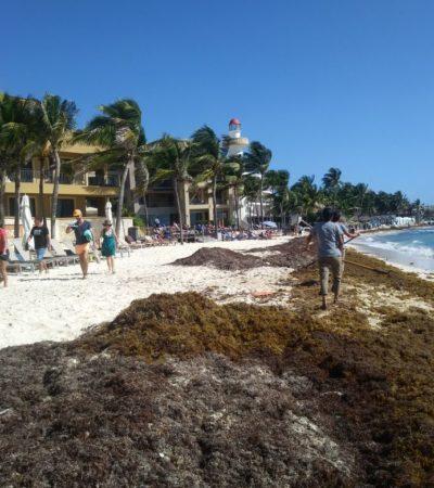 Afecta sargazo playas de Playa del Carmen