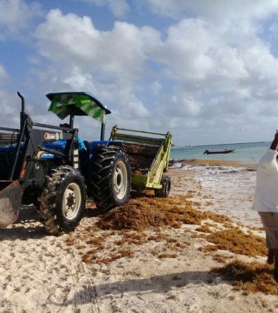 Limpian playas de Solidaridad ante arribo de sargazo