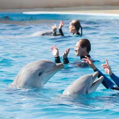 Intensifican cabildeo a favor de una regulación favorable a los delfinarios