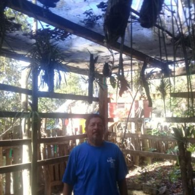La ceiba gigante de Solferino rodeada de orquídeas