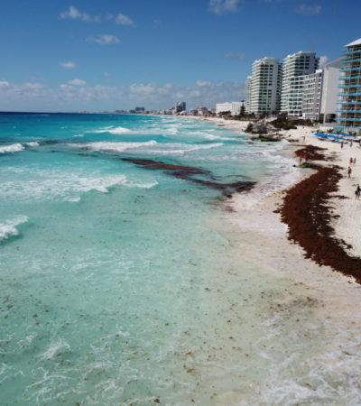 INESPERADA VISITA A CANCÚN: Se llenan las playas de sargazo e implementan operativo especial para retirar las algas que cubren la arena