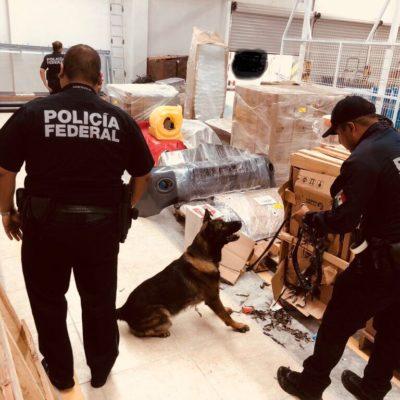 Procedente de Guadalajara, interceptan cargamento de 25 kilos de marihuana en el aeropuerto de Cancún