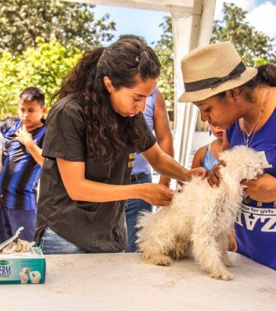 Anuncian Semana de Vacunación Antirrábica del 11 al 17 de marzo en Puerto Morelos