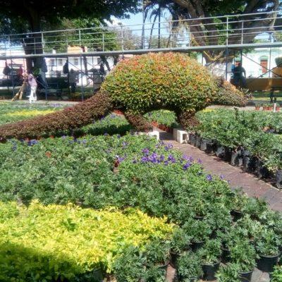 Llenan de flores el parque 'La Mejorada' en el centro de Mérida