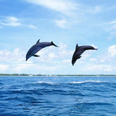 El futuro de los delfines y su ecosistema serán motivo de análisis en la Universidad Tec Milenio