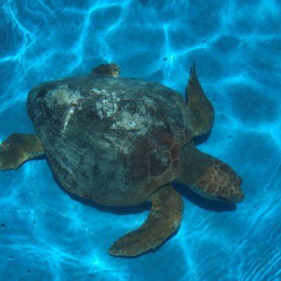 Puerto Morelos se alista para proteger tortugas