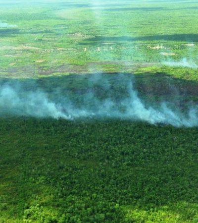 Alerta de incendios forestales por altas temperaturas y vientos fuertes