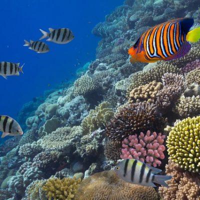 De 1 mil 800 a 2 mil turistas esperan cada día en los arrecifes de Cozumel durante  Semana Santa