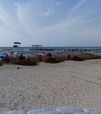 Con burócratas de 'puente', sólo infractores limpiaron sargazo en Playa del Carmen