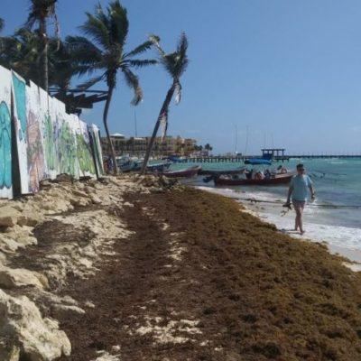 El sargazo mata peces, moluscos, erizos, pastos y corales: El Colegio de la Frontera Sur