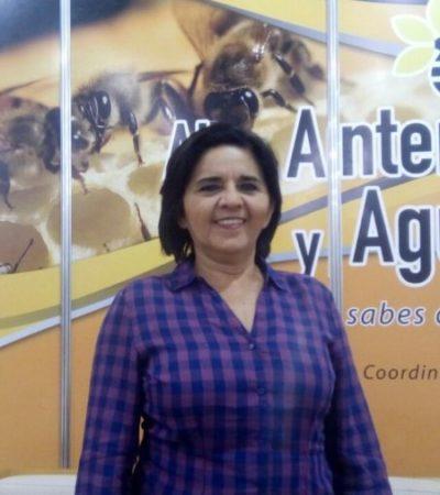 Pomueve Yucatán más emprendimientos en apicultura