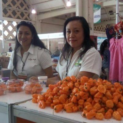 Productores de chile habanero de la Península y del sureste mexicano unen fuerzas para incrementar exportación