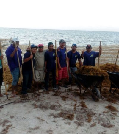 Todos los días recolectan 50 toneladas de sargazo en Mahahual