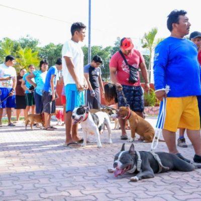 Campaña Antirrábica vacuna a 3 mil 500 caninos y felinos en Tulum