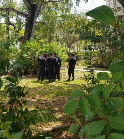 Boletas de infracción y hombreras policiacas son halladas entre arbustos en la SM 32