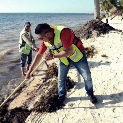 Redoblan esfuerzos en Cancún para retiro de sargazo de playas