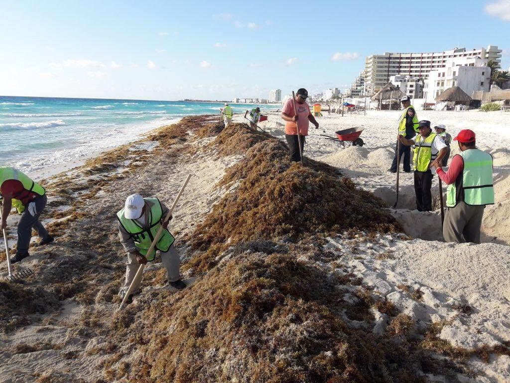 A contracorriente del sargazo, hoteleros de Cancún se preparan para  tener playas 'limpias' del algas marinas
