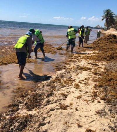 Recalan en Cancún 180 toneladas de sargazo en una semana
